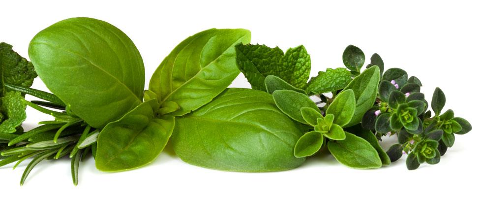 20140813-Main-banner---Herbs---980-x-400-px