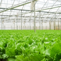 The Fruit Republic expands its modern greenhouse production in Dalat